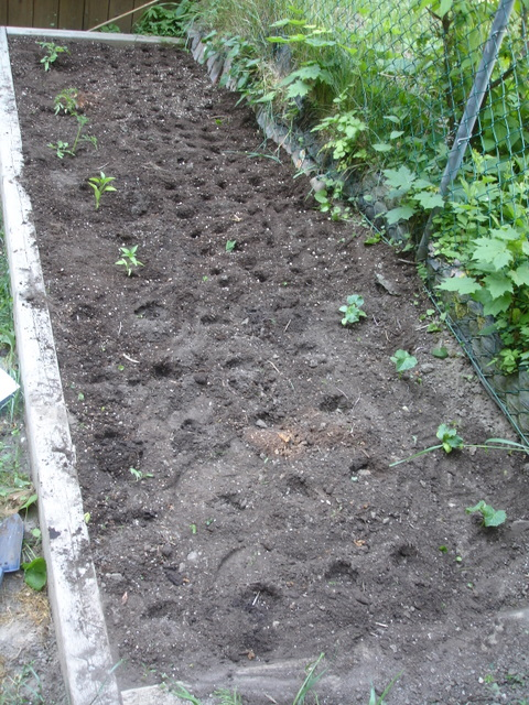 Seeding an in ground garden