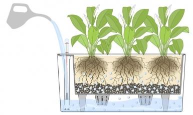 selfwateringplanter