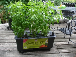 EarthBox with Basil