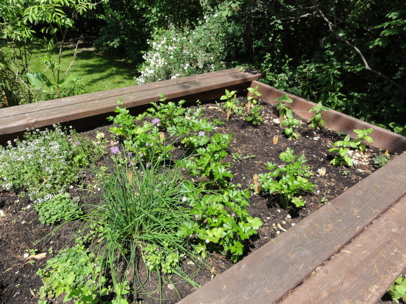 Herbs in Raised Bed
