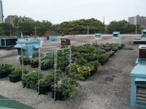 regent park rooftop earthbox garden