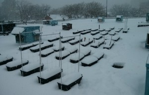 Earthboxes in snow