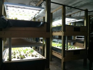 another view of the grow beds
