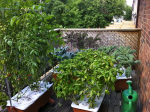 Young Urban Farmers Condo and Apartment Gardens Young Urban Farmers