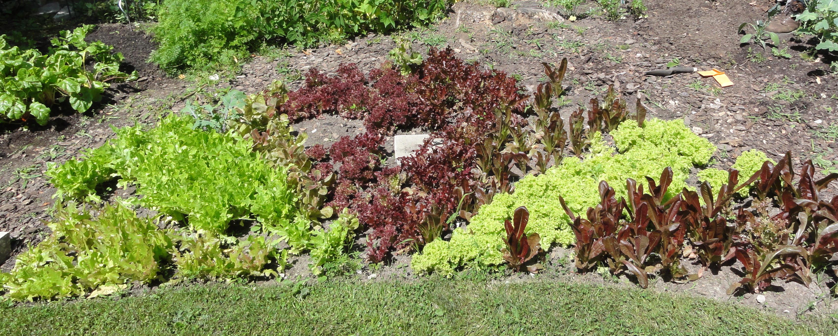 lettuce wheel