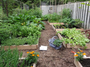 YUF Was Bought In To Bring Order And Simplicity To This Enclosed Backyard  Garden Space. To Minimize Weeding And Maximize Production, Twelve Custom  Sized ...