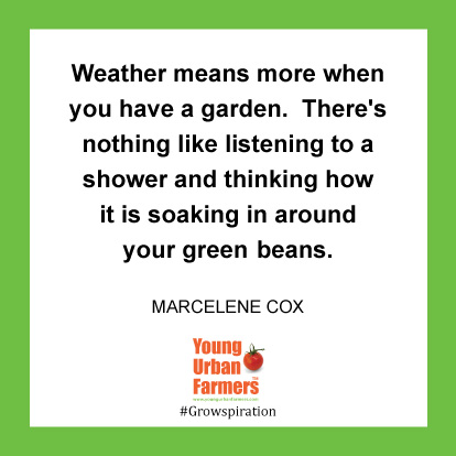 Weather means more when you have a garden. There's nothing like listening to a shower and thinking how it is soaking in around your green beans.-Marcelene Cox