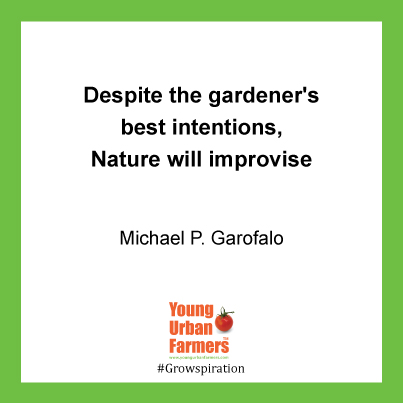 Despite the gardener's best intentions, Nature will improvise - Michael P. Garofalo