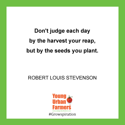 Don't judge each day by the harvest your reap, but by the seeds you plant. -Robert Louis Stevenson