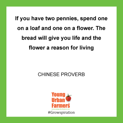 """If you have two pennies, spend one on a loaf and one on a flower. The bread will give you life and the flower a reason for living."" - Chinese Proverb"