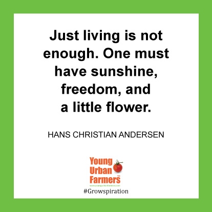 Just living is not enough. One must have sunshine, freedom, and a little flower.-Hans Christian Andersen