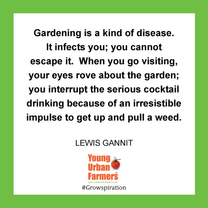 Gardening is a kind of disease. It infects you, you cannot escape it. When you go visiting, your eyes rove about the garden; you interrupt the serious cocktail drinking because of an irresistible impulse to get up and pull a weed.-Lewis Gannit