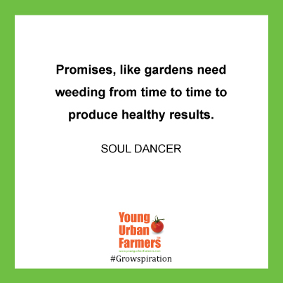 """Promises, like gardens need weeding from time to time to produce healthy results."" ― Soul Dancer, Pay Me What I'm Worth"