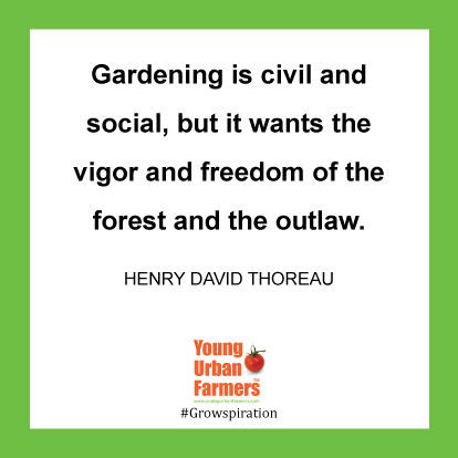Gardening is civil and social, but it wants the vigor and freedom of the forest and the outlaw. -Henry David Thoreau