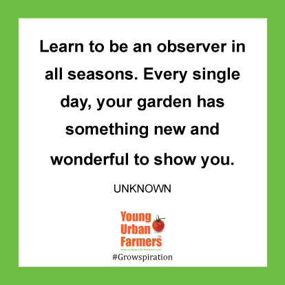Learn to be an observer in all seasons. Every single day, your garden has something new and wonderful to show you.-Unknown