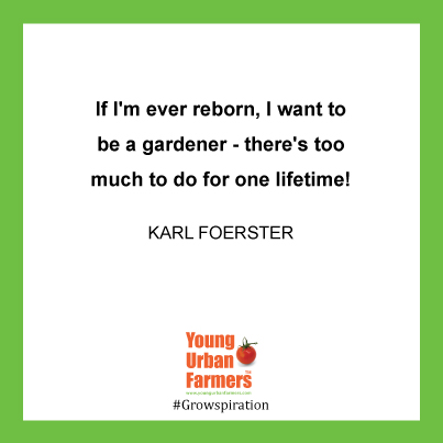 If I'm ever reborn, I want to be a gardener - there's too much to do for one lifetime! - Karl Foerster, plant breeder and writer, 1874-1970