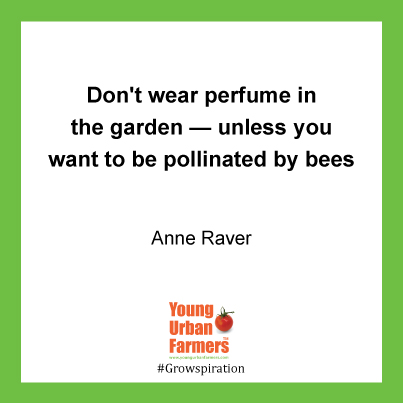 Don't wear perfume in the garden — unless you want to be pollinated by bees - Anne Raver