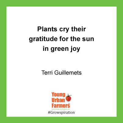 Plants cry their gratitude for the sun in green joy - Terri Guillemets