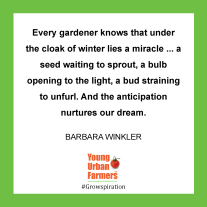 Every gardener knows that under the cloak of winter lies a miracle ... a seed waiting to sprout, a bulb opening to the light, a bud straining to unfurl. And the anticipation nurtures our dream. -Barbara Winkler