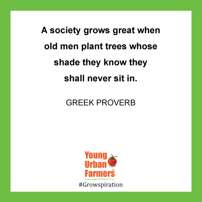 """""""A society grows great when old men plant trees whose shade they know they shall never sit in."""" - Greek Proverb"""