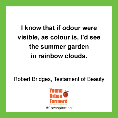 I know that if odour were visible, as colour is,I'd see the summer garden in rainbow clouds - Robert Bridges, Testament of Beauty