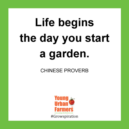 Life begins the day you start a Garden.-Chinese Proverb
