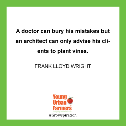 A doctor can bury his mistakes but an architect can only advise his clients to plant vines. - Frank Lloyd Wright