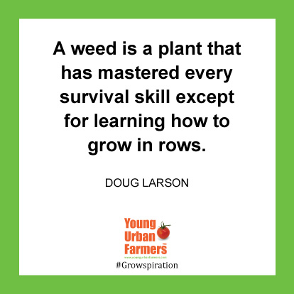 A weed is a plant that has mastered every survival skill except for learning how to grow in rows. -Doug Larson