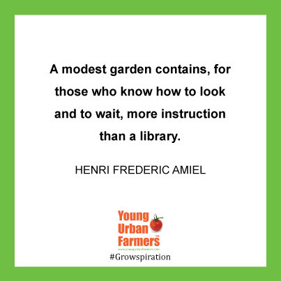 A modest garden contains, for those who know how to look and to wait, more instruction than a library.--Henri Frederic Amiel