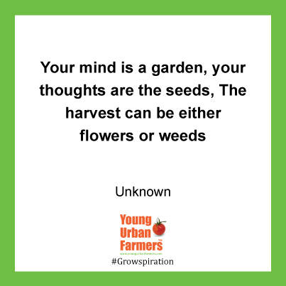 Your mind is a garden, your thoughts are the seeds, The harvest can be either flowers or weeds - Unknown
