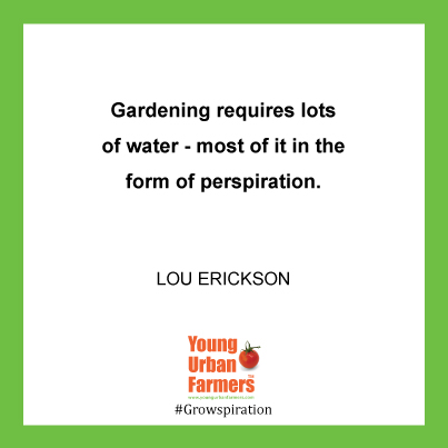 """Gardening requires lots of water - most of it in the form of perspiration."" - Lou Erickson, cartoonist and illustrator 1913-1990"