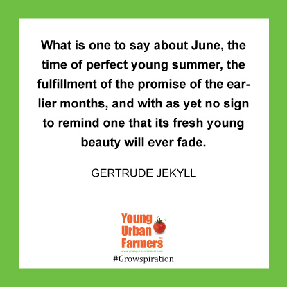 What is one to say about June, the time of perfect young summer, the fulfillment of the promise of the earlier months, and with as yet no sign to remind one that its fresh young beauty will ever fade. -Gertrude Jekyll