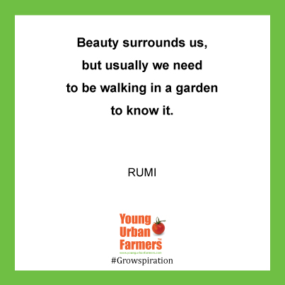 Beauty surrounds us, but usually we need to be walking in a garden to know it- Rumi