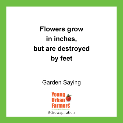 Flowers grow in inches, but are destroyed by feet - Gardening Saying