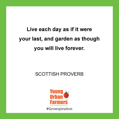 Live each day as if it were your last, and garden as though you will live forever.-Scottish proverb