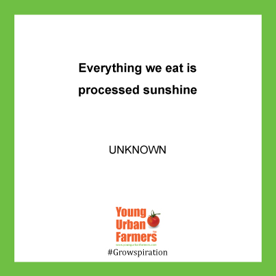 Everything we eat is processed sunshine - Unknown