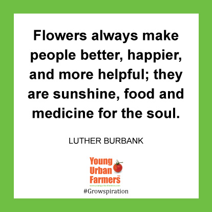 Flowers always make people better, happier, and more helpful; they are sunshine, food and medicine for the soul. -Luther Burbank