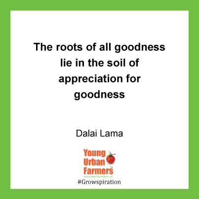 The roots of all goodness lie in the soil of appreciation for goodness - Dalai Lama
