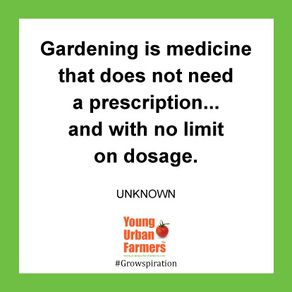 Gardening is medicine that does not need a prescription...and with no limit on dosage. -Author Unknown