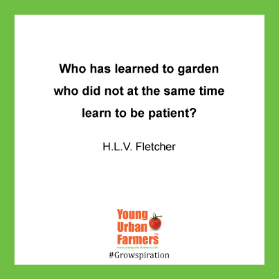 "Who has learned to garden who did not at the same time learn to be patient?"" - H.L.V. Fletcher, 1949"
