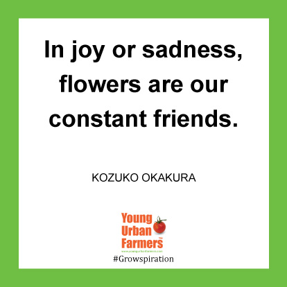 In joy or sadness, flowers are our constant friends.-Kozuko Okakura