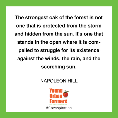 The strongest oak of the forest is not one that is protected from the storm and hidden from the sun. It's one that stands in the open where it is compelled to struggle for its existence against the winds, the rain, and the scorching sun. --Napoleon Hill