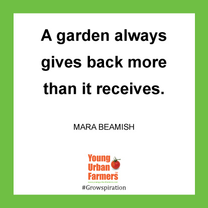 A garden always gives back more than it receives. -Mara Beamish