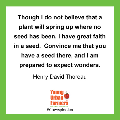 Though I do not believe that a plant will spring up where no seed has been, I have great faith in a seed.  Convince me that you have a seed there, and I am prepared to expect wonders. =-  Henry David Thoreau