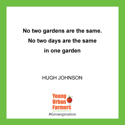 No two gardens are the same.  No two days are the same in one garden. Hugh Johnson