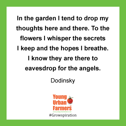 In the garden I tend to drop my thoughts here and there. To the flowers I whisper the secrets I keep and the hopes I breathe. I know they are there to eavesdrop for the angels. ~Dodinsky