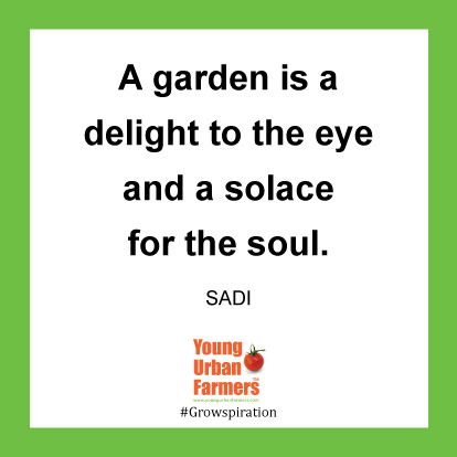 A garden is a delight to the eye and a solace for the soul. -Sadi