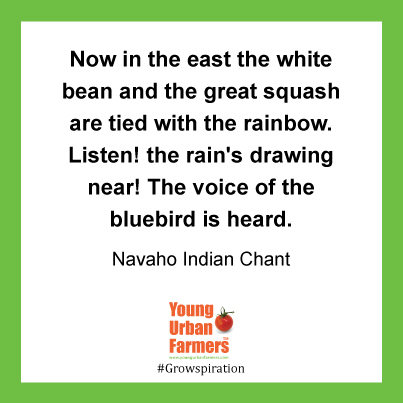 Now in the east the white bean and the great squash are tied with the rainbow. Listen! the rain's drawing near! The voice of the bluebird is heard. -   Navaho Indian Chant, Songs in the Garden of the House God