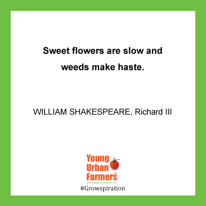 """Sweet flowers are slow and weeds make haste."" - William Shakespeare, Richard III; Act 2, Scene 4."