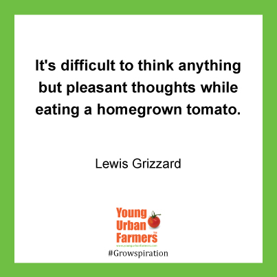 It's difficult to think anything but pleasant thoughts while eating a homegrown tomato. -  Lewis Grizzard